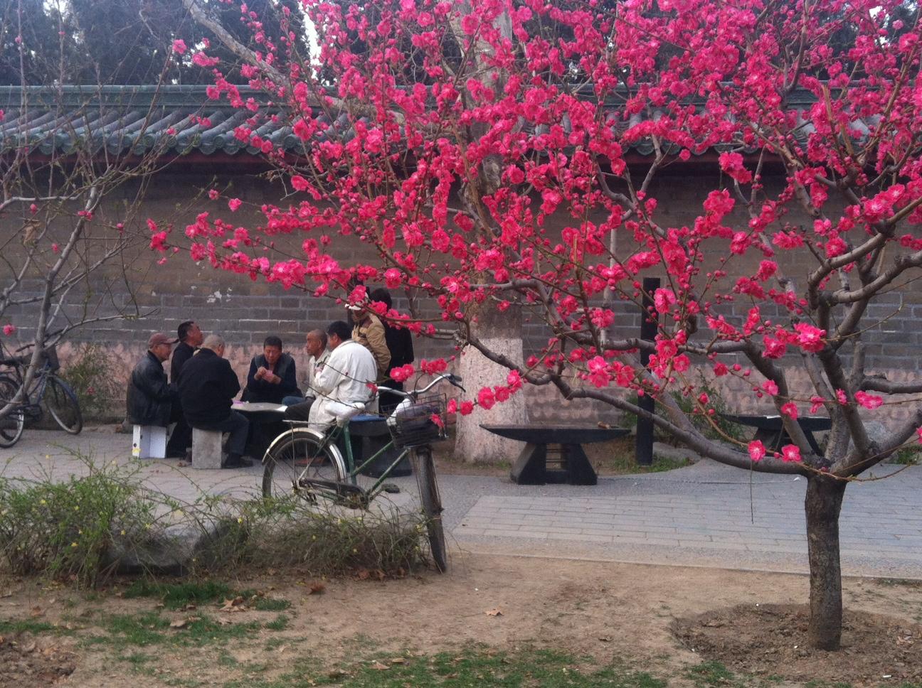 Beijing old men in the park