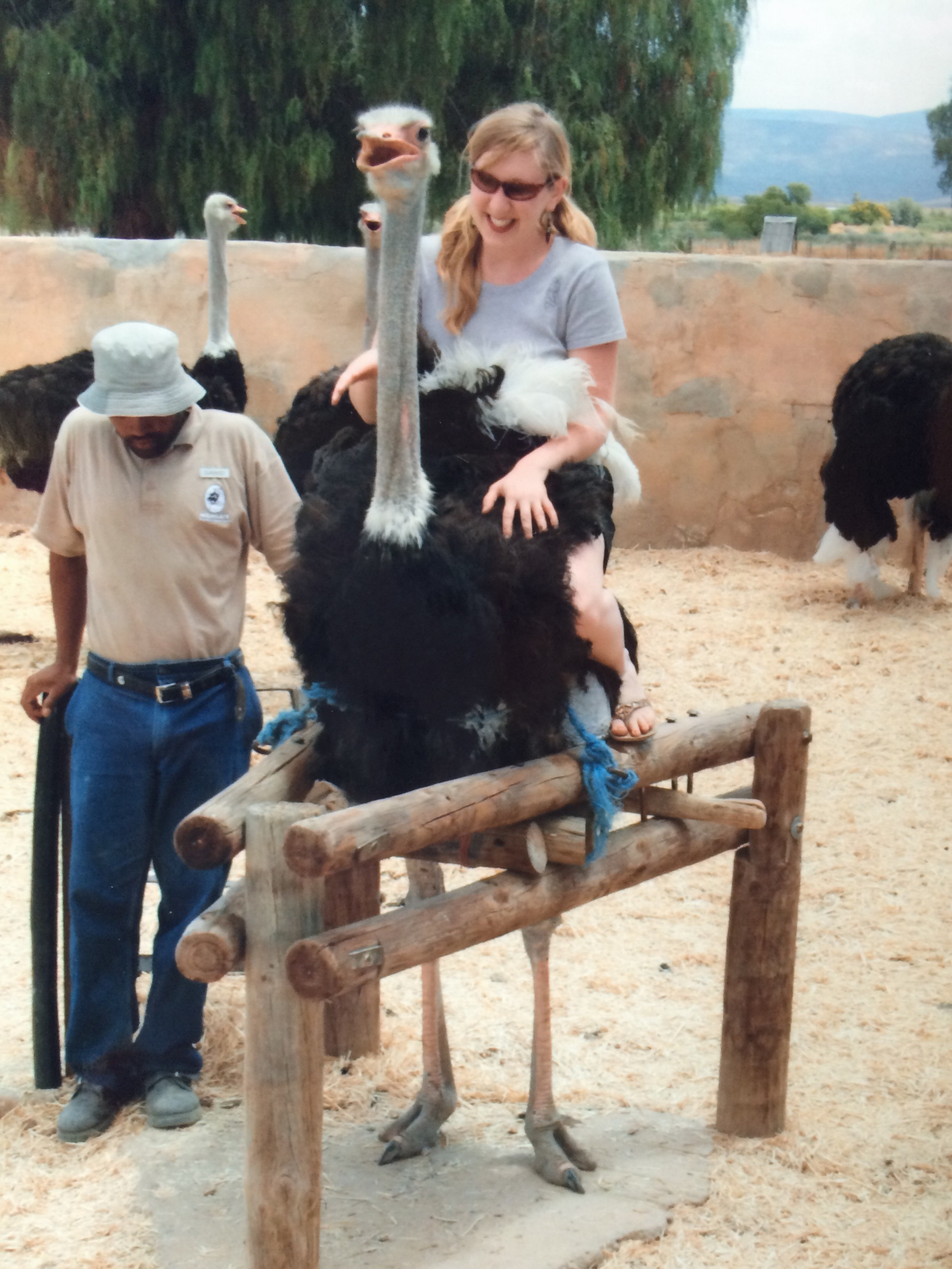 Lily Ostrich riding