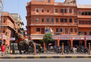 Jaipur-elephant-in-the-street