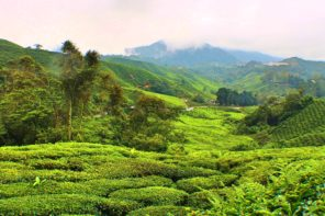 Solving the Mysteries of Malaysia's Cameron Highlands
