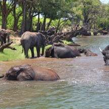 Muchenje safari river cruise elephants bathing c. Joshua Heise