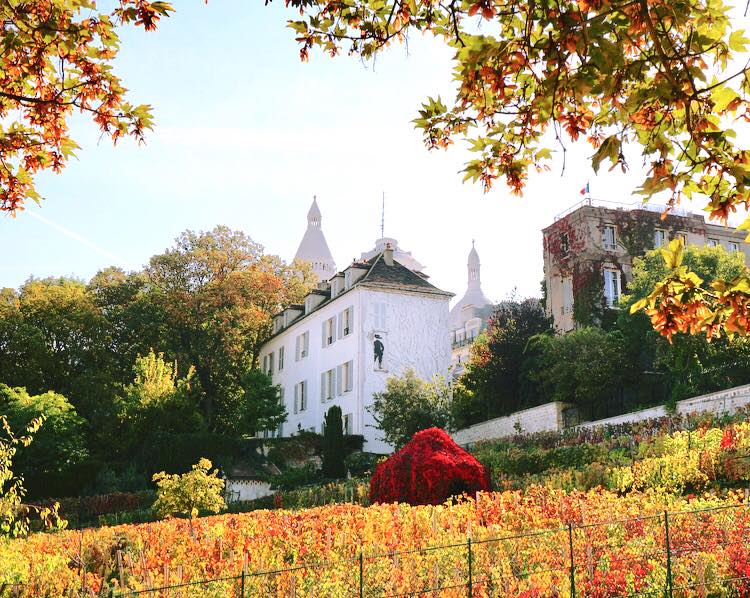Musee de Motmartre & Vineyard of Montmartre